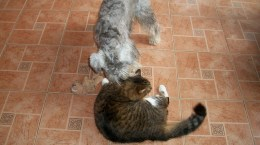 Dog and Cat Diary - Funny