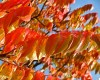 Fall Foliage - Orange Leaves in the Mail
