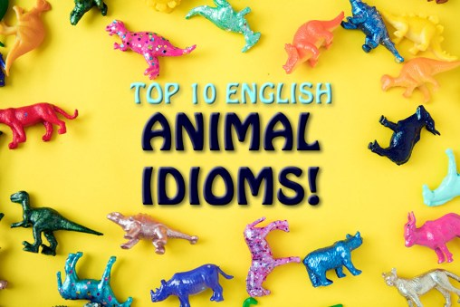 top 10 animal idioms