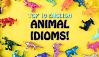 top 10 animal idioms