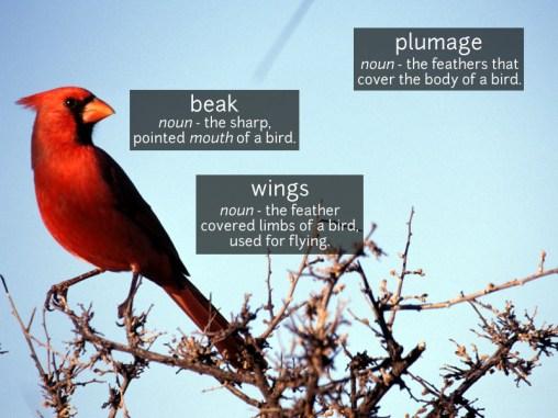 bird vocabulary