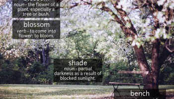 blossom vocabulary
