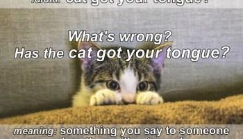 Idiom - Cat got your tongue