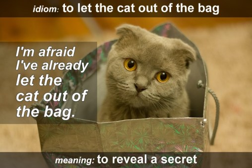 cat out bag idiom