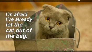 cat out bag idiom