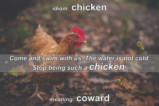 chicken idiom