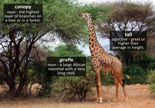 giraffe vocabulary