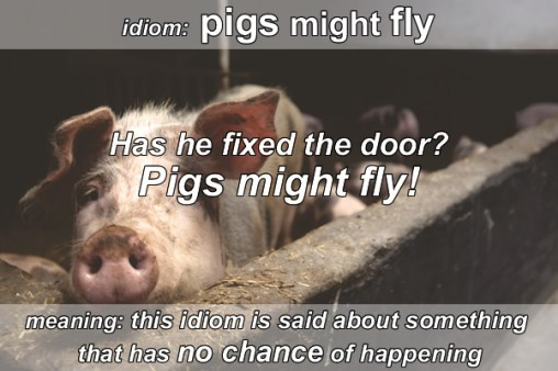 Idiom - Pigs might fly