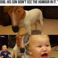 Dog with horse mask