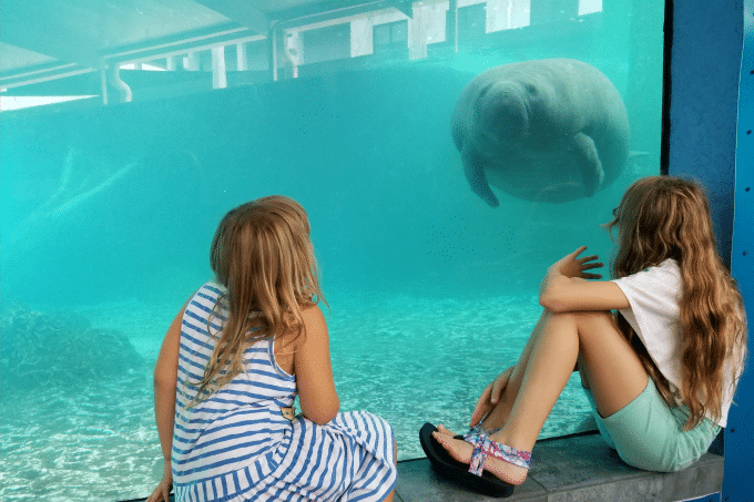 Girls getting up close and personal with manatees at the Mote Aquarium