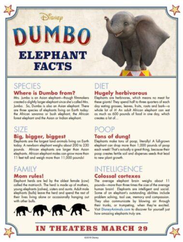 Dumbo Elephant Facts a