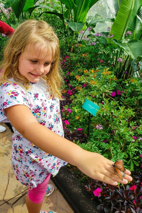 Butterfly landing on Keira's hand