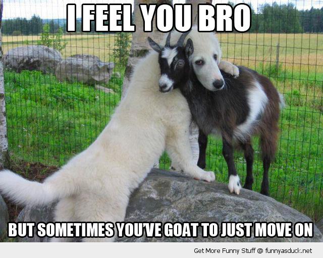 goat+dog fella