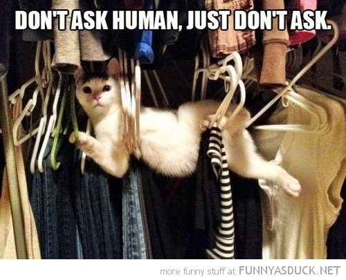 cat lolcat animal stuck cupboard coat hangers don't ask human funny pics pictures pic picture image photo images photos lol