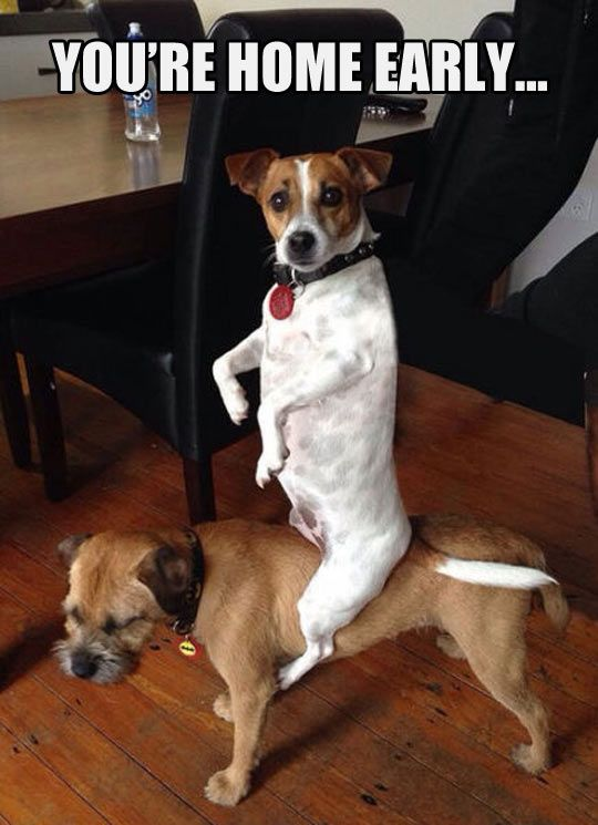 Image result for funny animals with captions