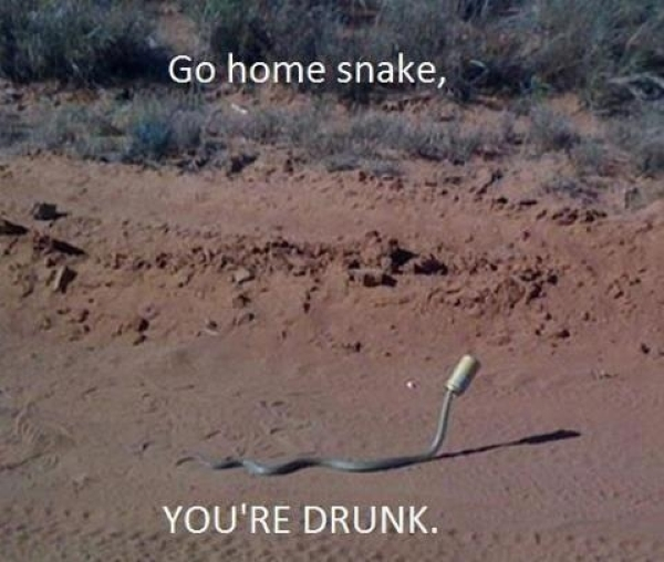 Drunk snake - Funny pictures