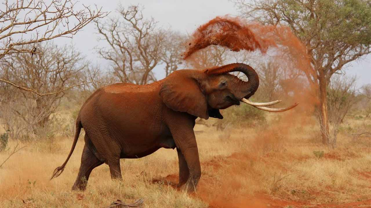 How to prevent wild Elephant and Rhinoceros attack ?