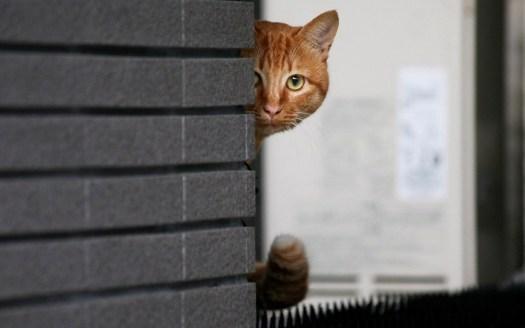 Spot the hidden Cat