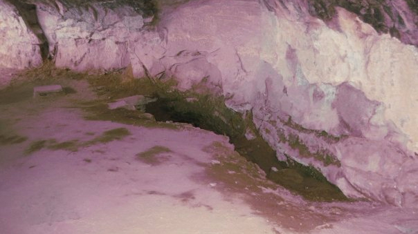 Seeps spring formed when the winter snowmelt. This is where they source for water.