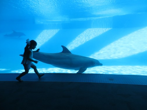 Dolphin Show Room