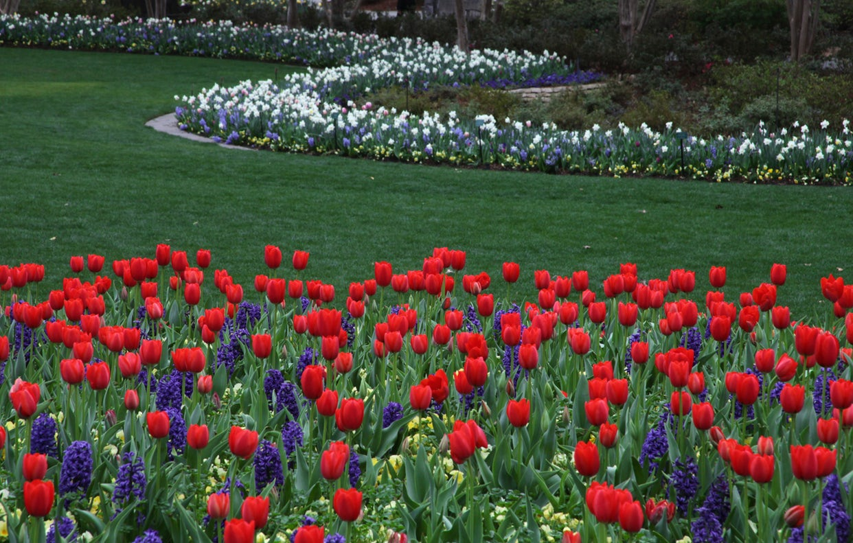 Dallas Blooms: Largest Floral Festival In Texas Is Now Open