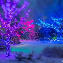 Night Lights Tower Hill Botanic Garden