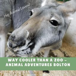 Kangaroo - Animal Adventures Bolton, MA