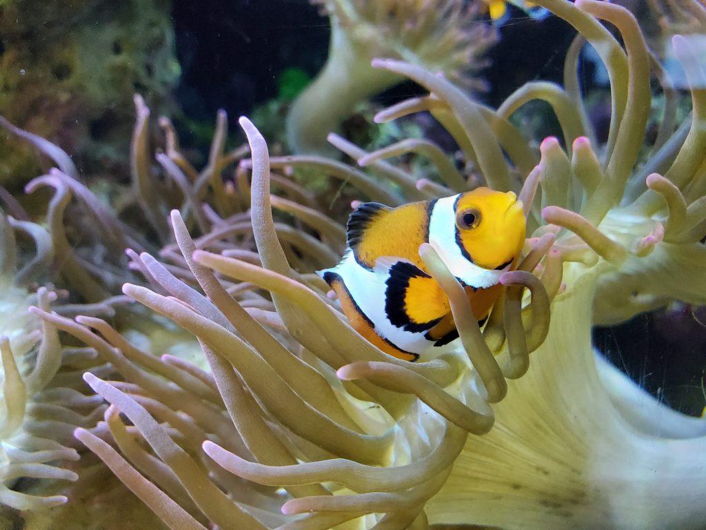 Mystic Aquarium - Nemo Fish
