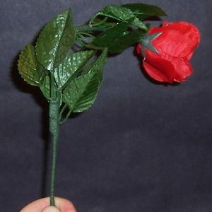 drooping rose