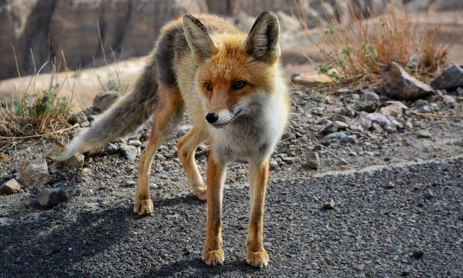 Wildlife-on-streets