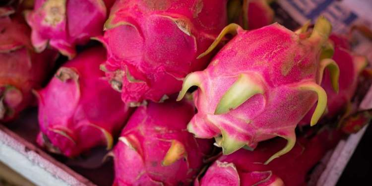 Dragon Fruit Or Kamalam - All You Want To Know