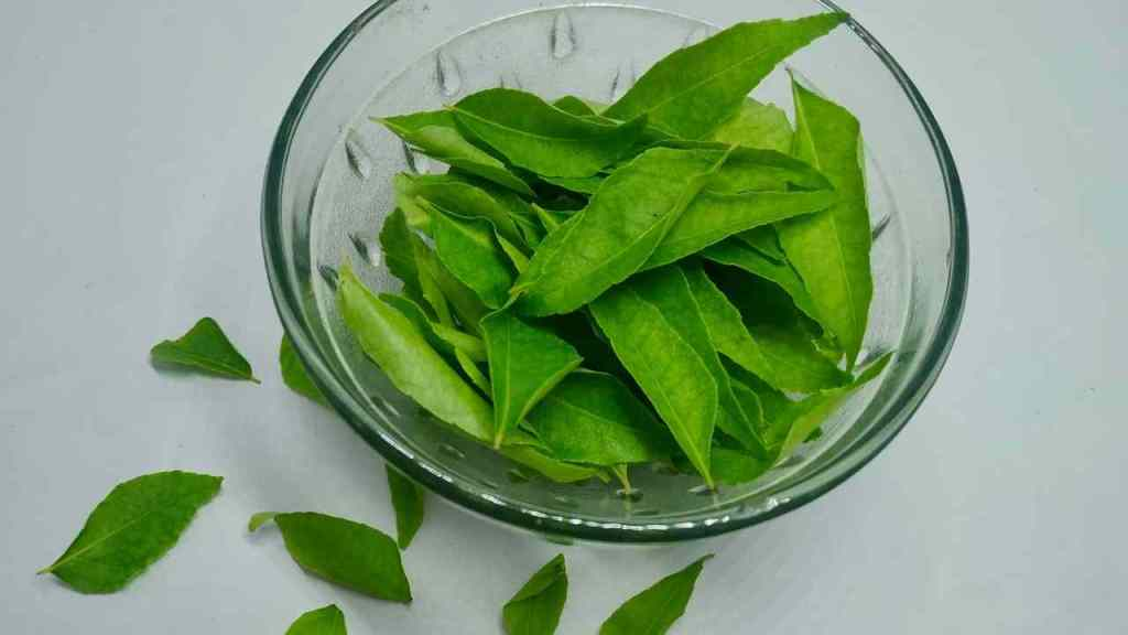 Steps to Store Curry Leaves For A Longer Period