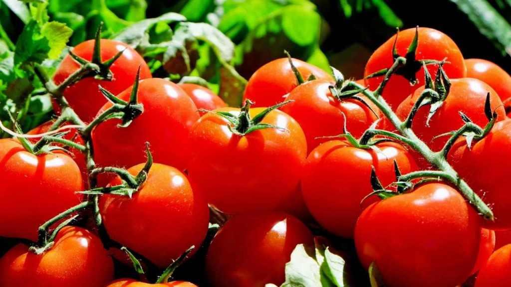 Tomato - Anti-Aging Foods