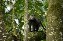 Kakamega_Forest_National_Reserve_016