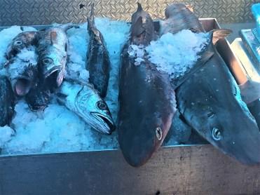 Steventon Fisherman's Wharf (28)