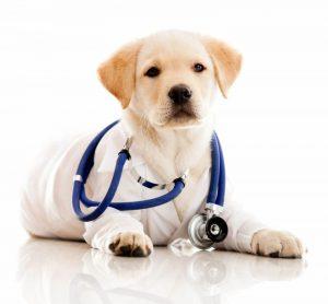 pet-vet-east-coast-adoption-agency