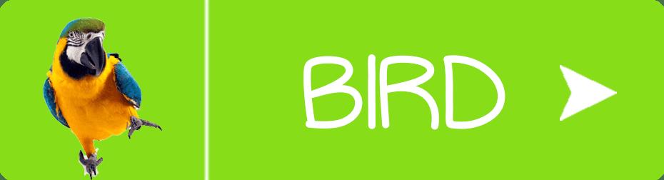 FurbabySocks Birds Button