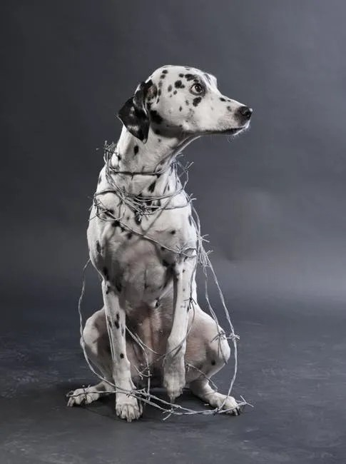Brisbane Puppy Training| Puppy Training Brisbane
