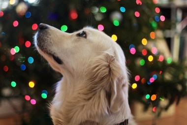 Dog Christmas Gift Ideas | Ultimate Gift Guide for Dogs