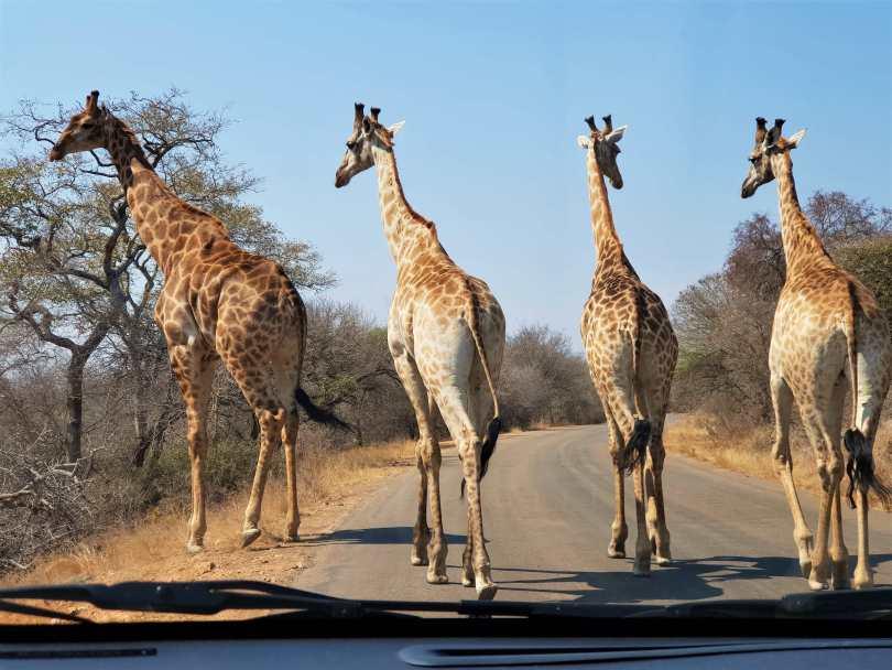 sudafrica con niños