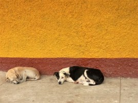 dogs + colors