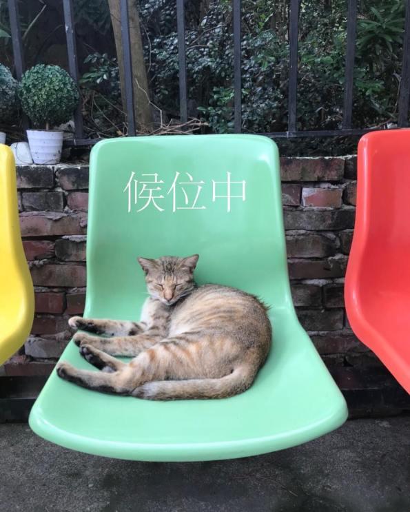 丑咖啡 BU-SU café(大溪店) 5 Travel of Rice 小米遊記