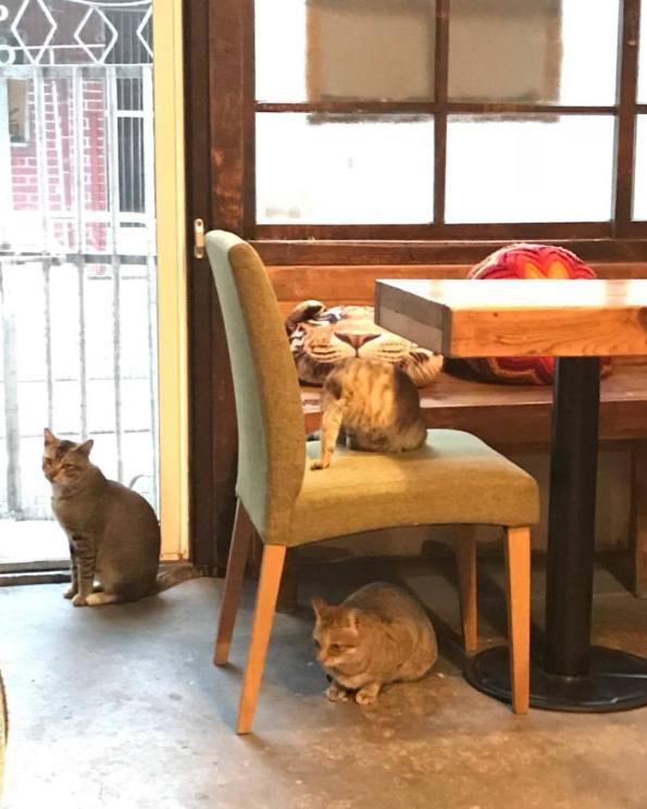 丑咖啡 BU-SU café(大溪店) 22 Travel of Rice 小米遊記