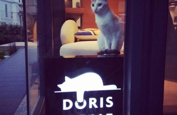 朵麗絲的家DORIS HOME