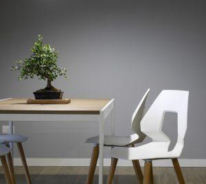 bonsai tree on dining table