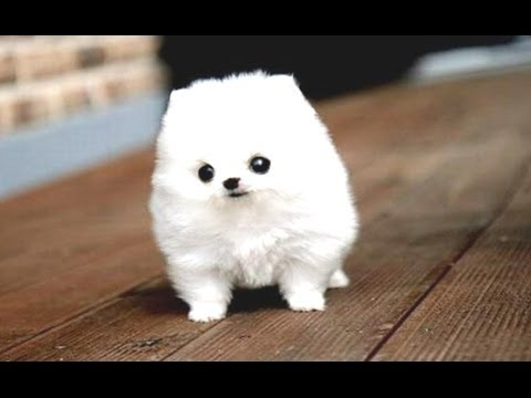 Image of: Compilation 779 Furry n Cute Dogs Cats Funny Videos Archives Furry n Cute