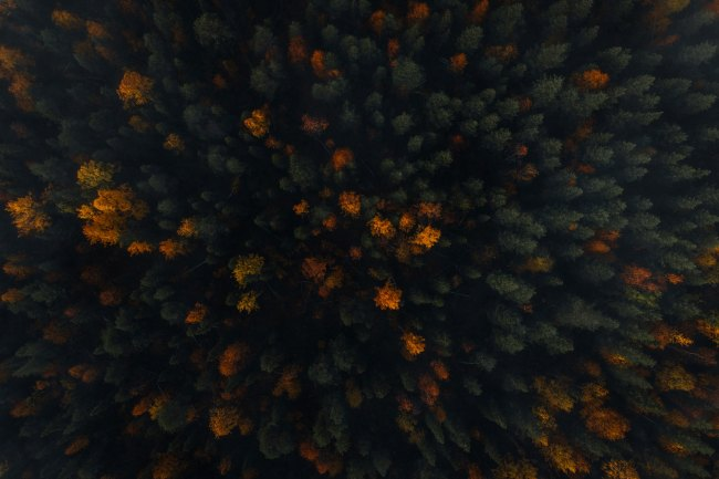 Aerial shot of autumn trees