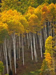 Under the Aspens - Park City, 2016