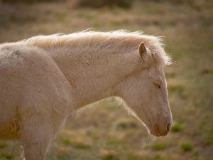 White Foal Sleeps