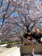 Pantalón corto y conversando entre árboles rosados II